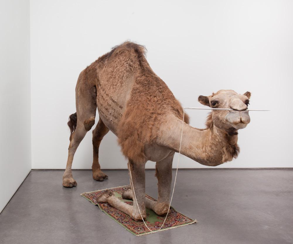 Huang Yong Ping, Camel