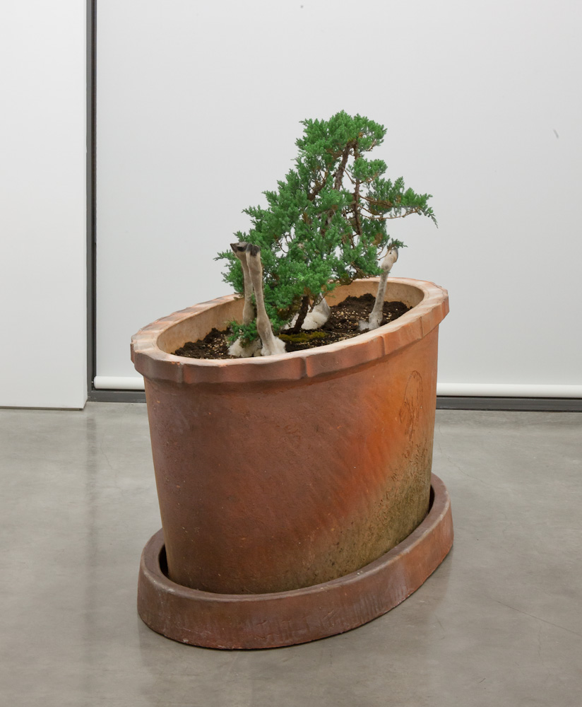 Huang Yong Ping, Lamb-Plant