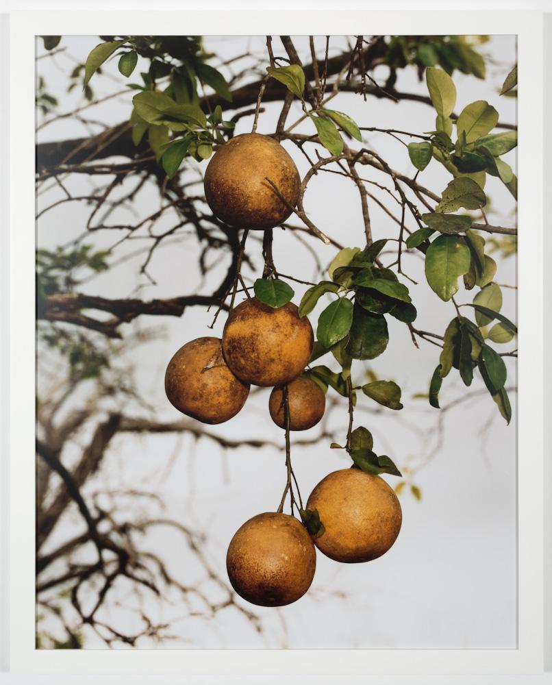 Roe Ethridge, Orange Grove #4
