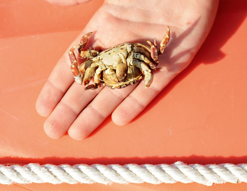 Roe Ethridge, Auggie with Dead Crab