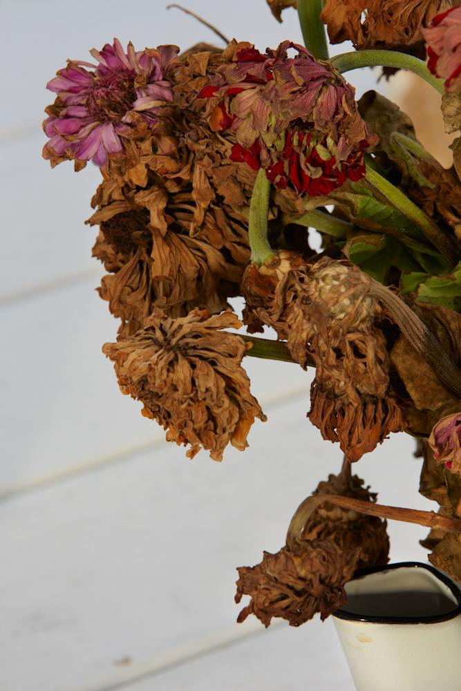 Roe Ethridge, Dead Flowers