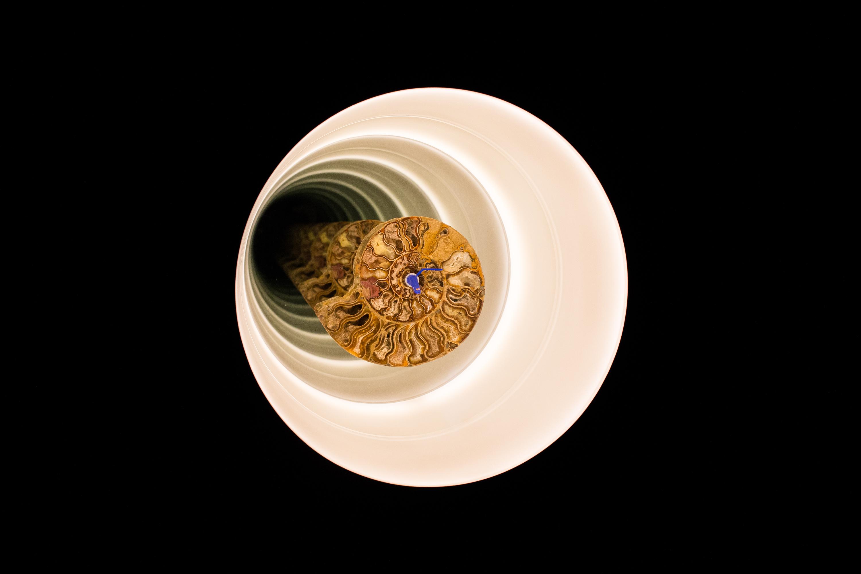 Cyprien Gaillard, Ammonite Dub